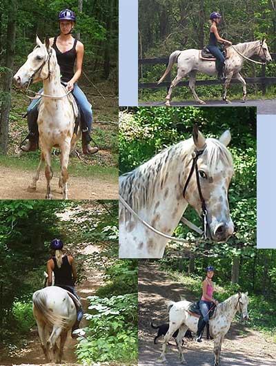 Ponies At Magic Mountain Farm Riding Lessons Pony Rides